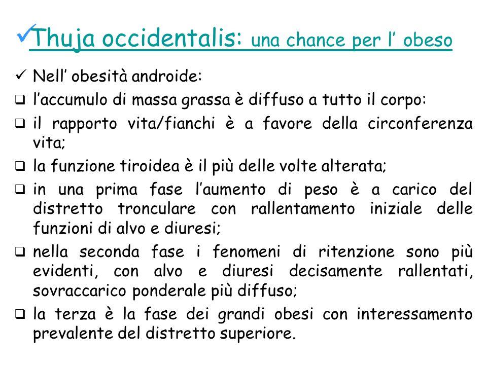 Thuja occidentalis: una chance per l obeso Nell obesità androide: laccumulo di massa grassa è diffuso a tutto il corpo: il rapporto vita/fianchi è a f