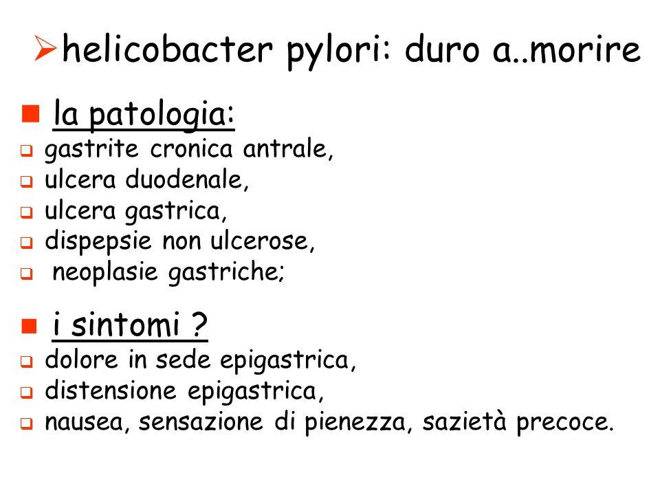 helicobacter pylori: duro a..morire la patologia: gastrite cronica antrale, ulcera duodenale, ulcera gastrica, dispepsie non ulcerose, neoplasie gastriche; i sintomi .