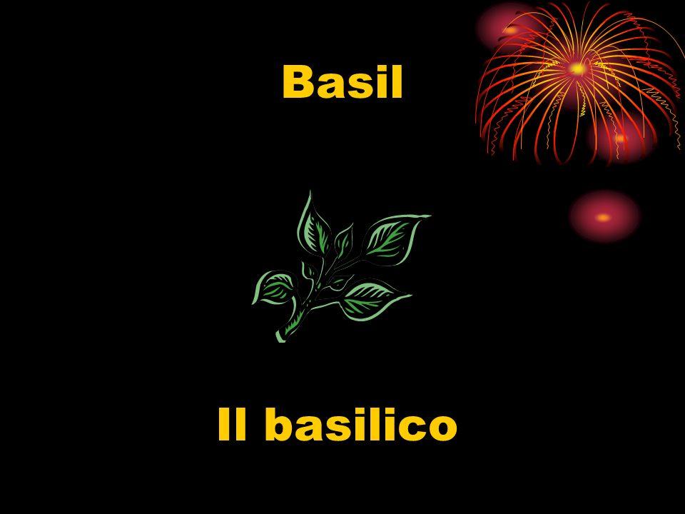 Basil Il basilico