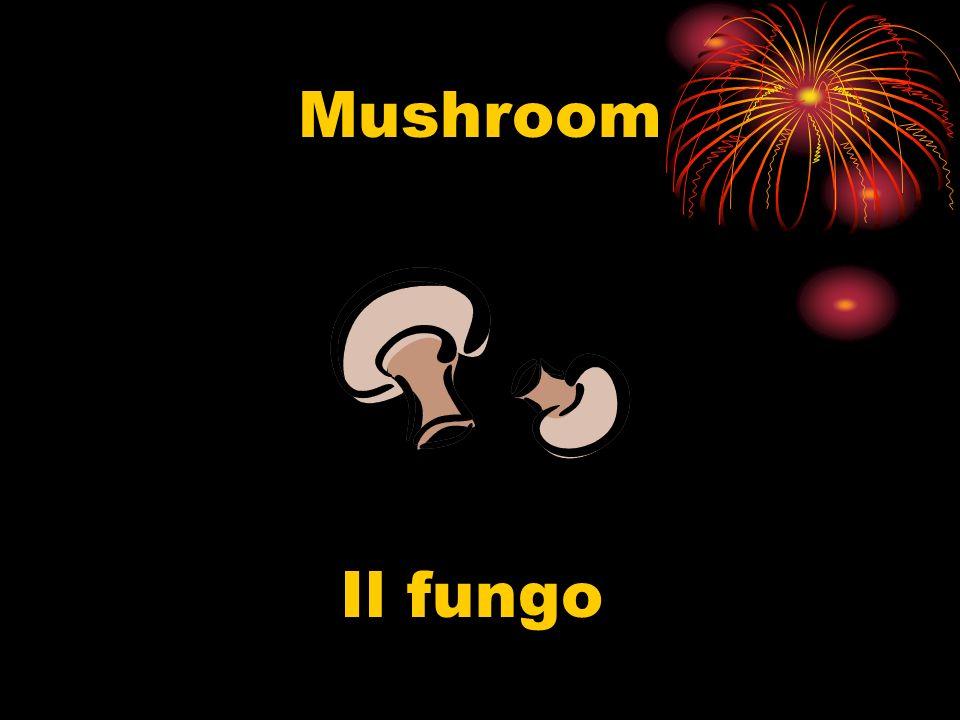 Mushroom Il fungo