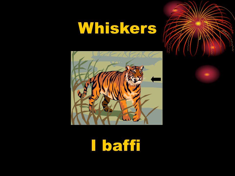 Whiskers I baffi