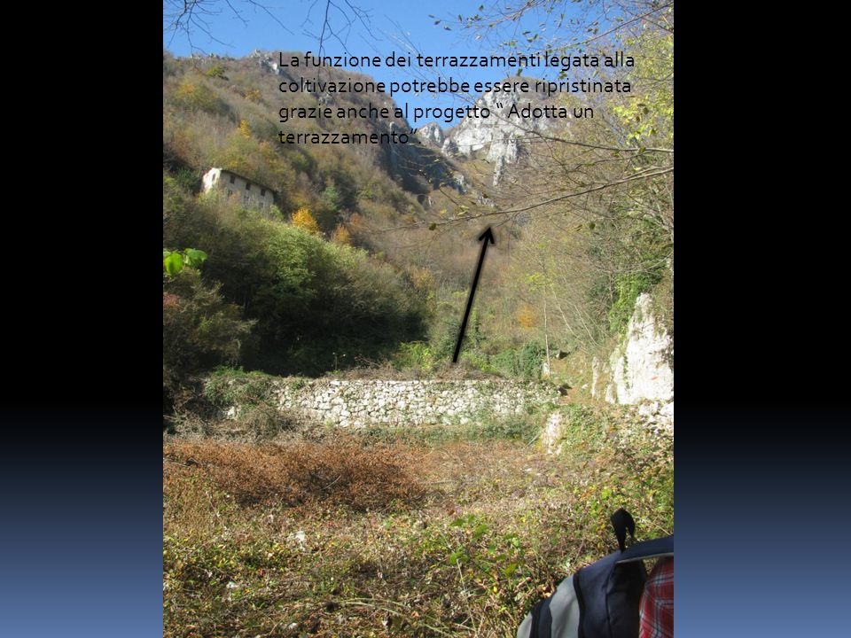 La funzione dei terrazzamenti legata alla coltivazione potrebbe essere ripristinata grazie anche al progetto Adotta un terrazzamento.