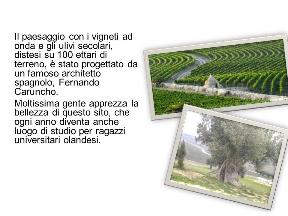 Il paesaggio con i vigneti ad onda e gli ulivi secolari, distesi su 100 ettari di terreno, è stato progettato da un famoso architetto spagnolo, Fernando Caruncho.