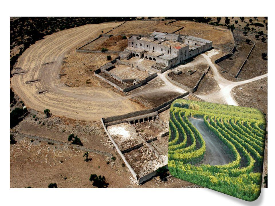 In questo frantoio si svolgeva la lavorazione delle olive, che venivano trasformate in olio.