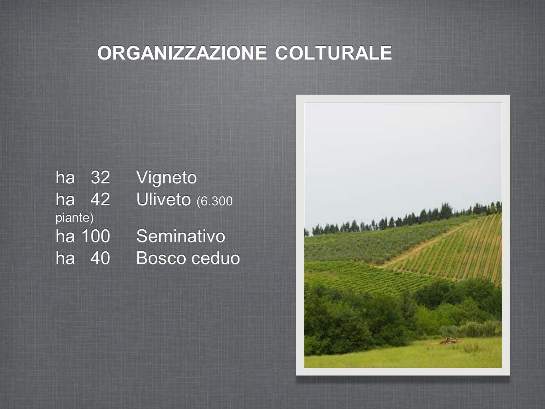 ORGANIZZAZIONE COLTURALE ha 32 Vigneto ha 42 Uliveto (6.300 piante) ha 100 Seminativo ha 40 Bosco ceduo ha 32 Vigneto ha 42 Uliveto (6.300 piante) ha 100 Seminativo ha 40 Bosco ceduo