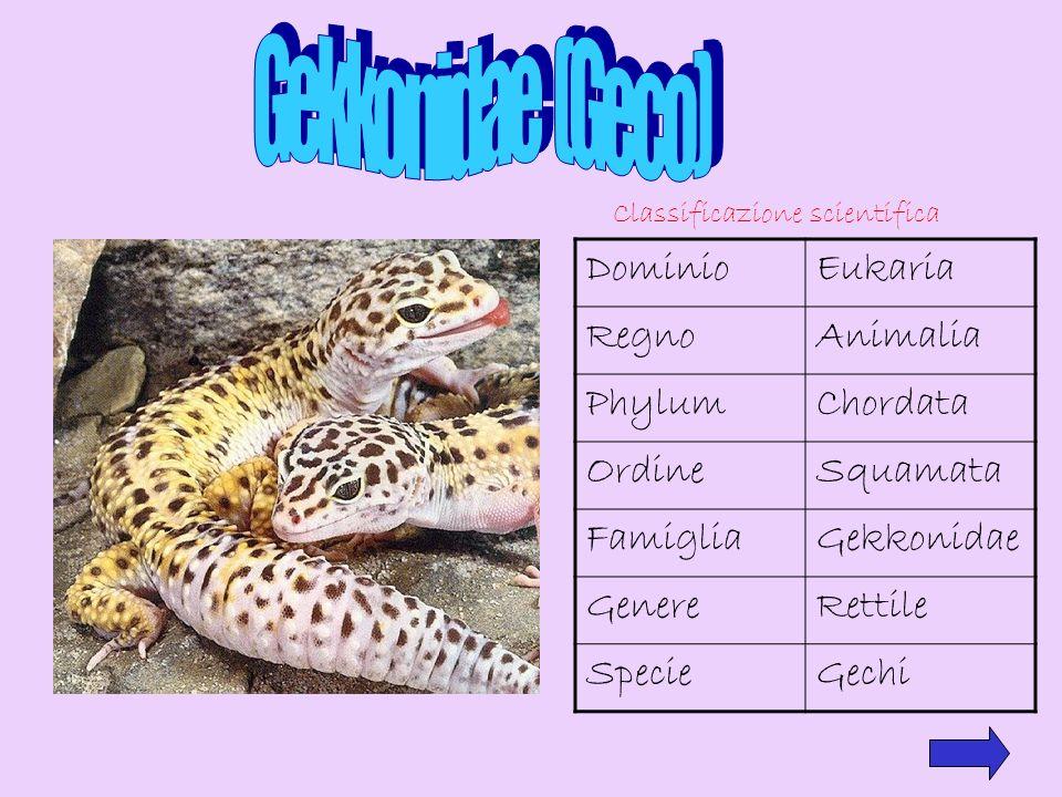 Classificazione scientifica DominioEukaria RegnoAnimalia PhylumChordata OrdineSquamata FamigliaGekkonidae GenereRettile SpecieGechi