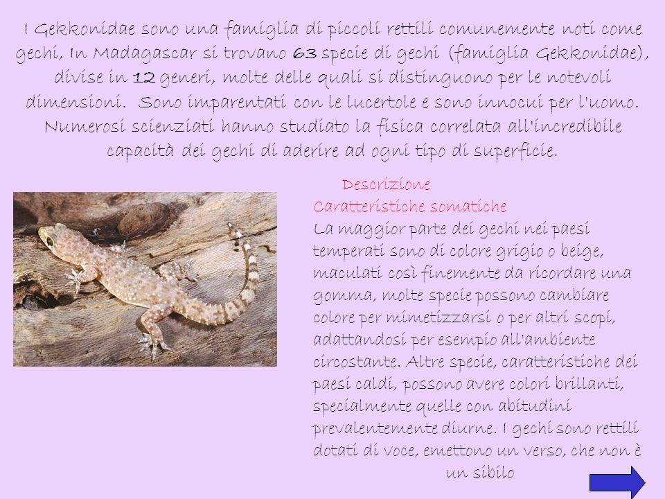 Zampe Le zampe del geco hanno attirato molta attenzione per la capacità di aderire a una varietà di superfici, senza la necessità di usare liquidi superficiali.