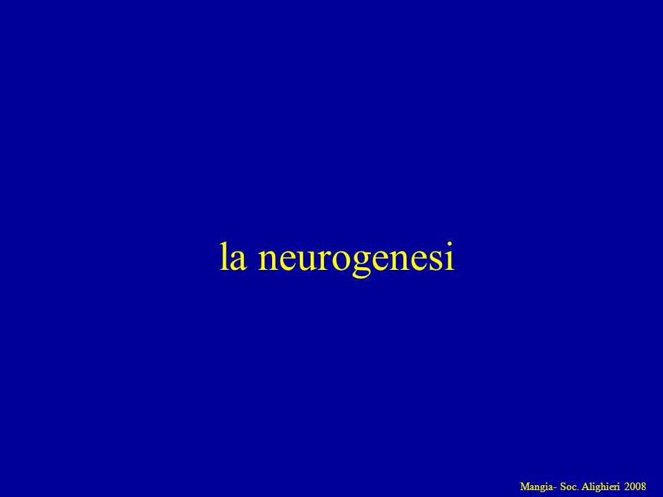Mangia- Soc. Alighieri 2008 la neurogenesi