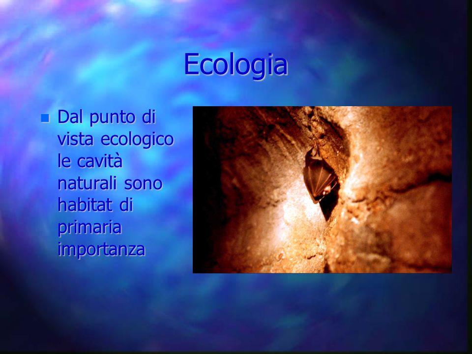 Ecologia Dal punto di vista ecologico le cavità naturali sono habitat di primaria importanza Dal punto di vista ecologico le cavità naturali sono habi