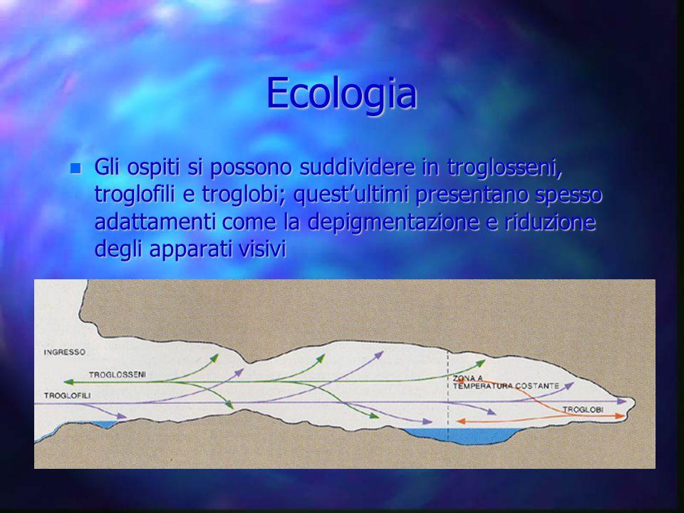 Ecologia Gli ospiti si possono suddividere in troglosseni, troglofili e troglobi; questultimi presentano spesso adattamenti come la depigmentazione e