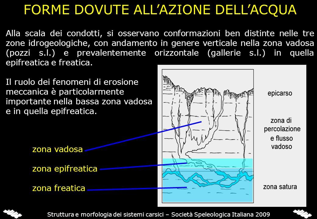 Struttura e morfologia dei sistemi carsici – Società Speleologica Italiana 2009 Alla scala dei condotti, si osservano conformazioni ben distinte nelle