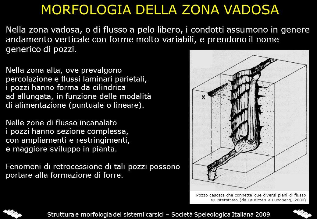 Struttura e morfologia dei sistemi carsici – Società Speleologica Italiana 2009 Nella zona alta, ove prevalgono percolazione e flussi laminari parieta