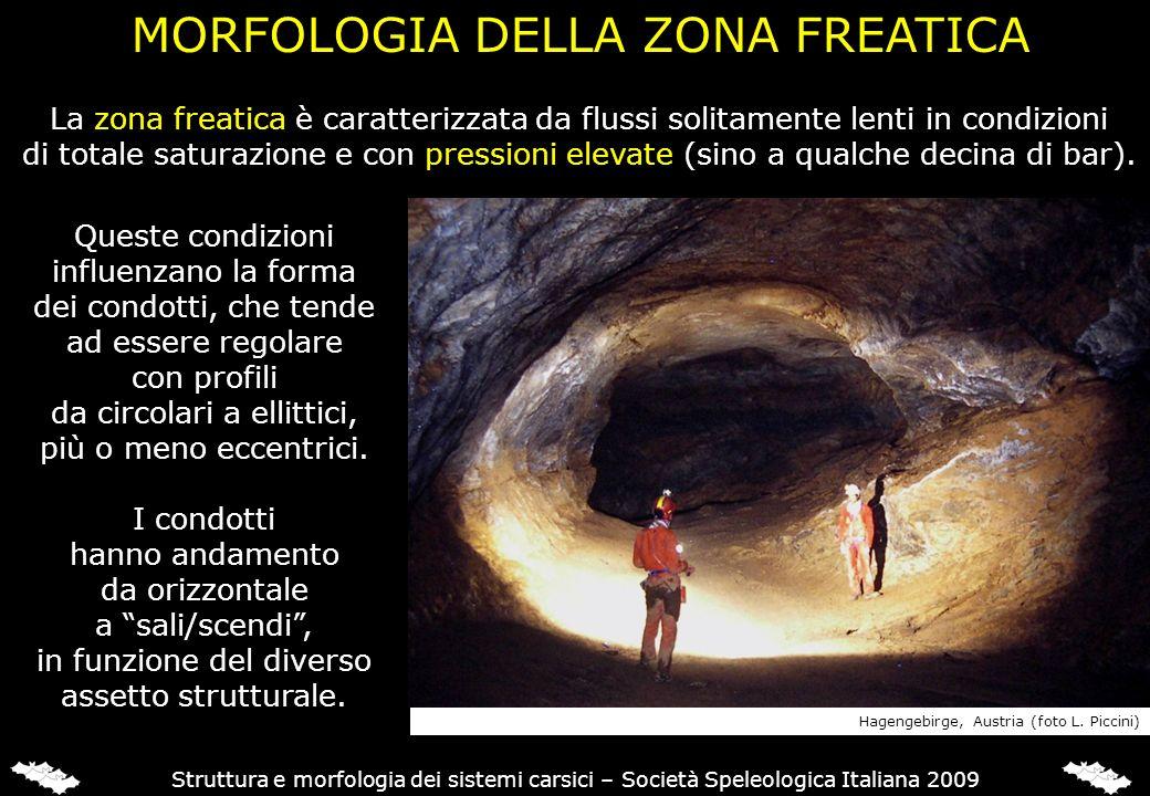 MORFOLOGIA DELLA ZONA FREATICA Struttura e morfologia dei sistemi carsici – Società Speleologica Italiana 2009 La zona freatica è caratterizzata da fl