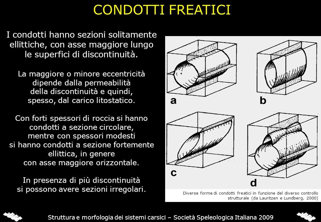 CONDOTTI FREATICI Struttura e morfologia dei sistemi carsici – Società Speleologica Italiana 2009 I condotti hanno sezioni solitamente ellittiche, con