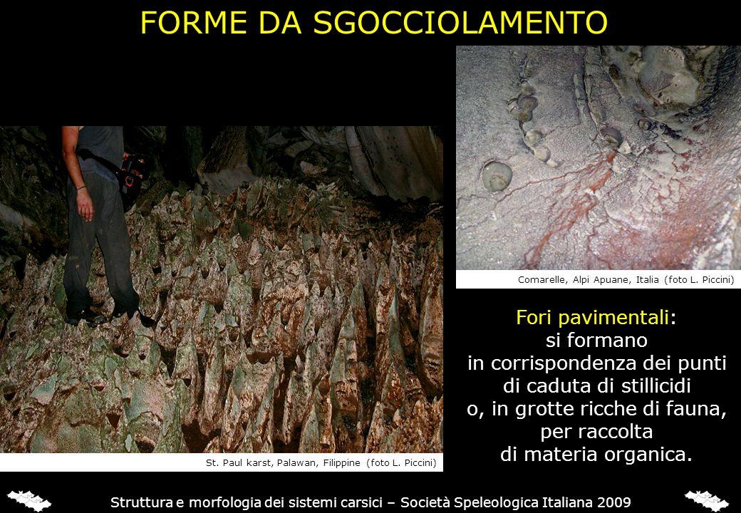 FORME DA SGOCCIOLAMENTO Struttura e morfologia dei sistemi carsici – Società Speleologica Italiana 2009 Fori pavimentali: si formano in corrispondenza