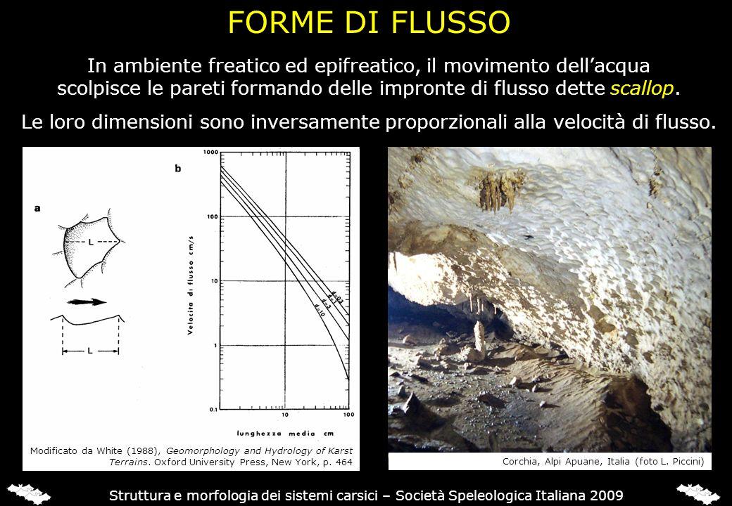 FORME DI FLUSSO Struttura e morfologia dei sistemi carsici – Società Speleologica Italiana 2009 In ambiente freatico ed epifreatico, il movimento dell