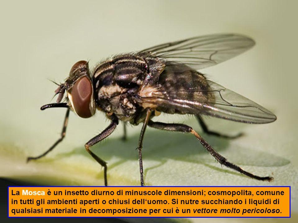 Il Tonchio è un piccolo coleottero che danneggia i baccelli e i semi di tutte le leguminose (fagioli, ceci, fave) immagazzinati rendendoli non commestibili.