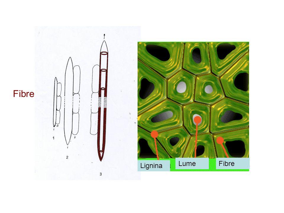 Fibre Lignina LumeFibre