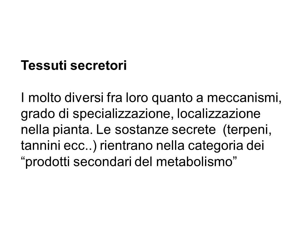 Tessuti secretori I molto diversi fra loro quanto a meccanismi, grado di specializzazione, localizzazione nella pianta. Le sostanze secrete (terpeni,
