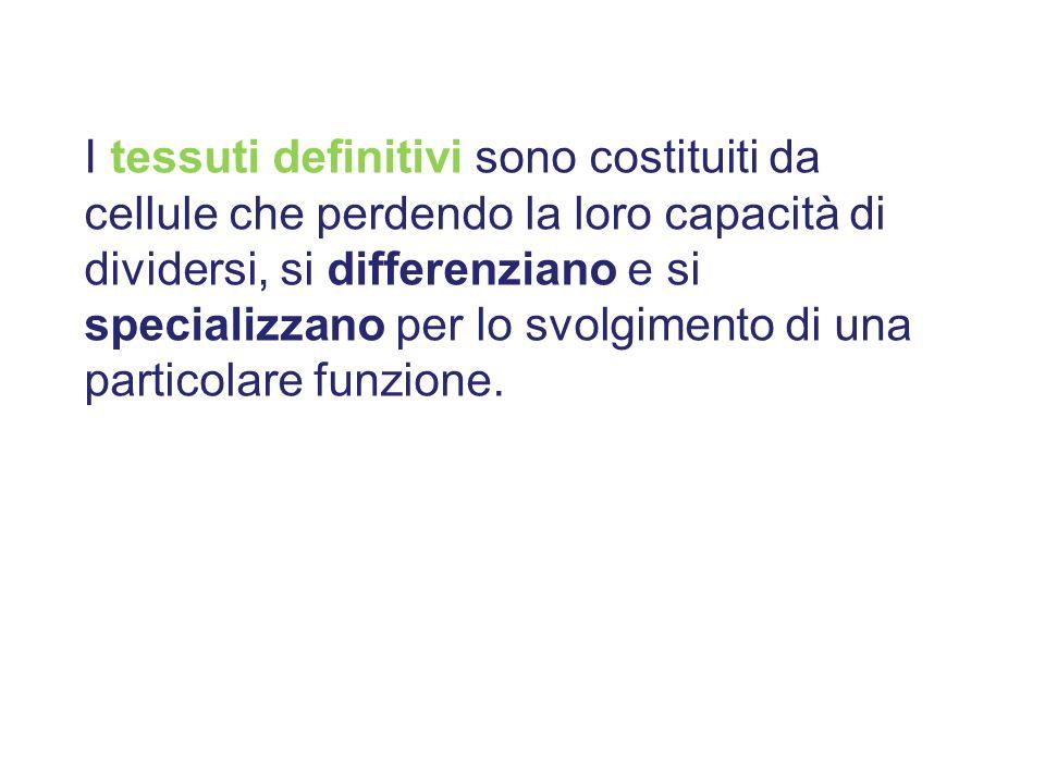 I tessuti definitivi sono costituiti da cellule che perdendo la loro capacità di dividersi, si differenziano e si specializzano per lo svolgimento di
