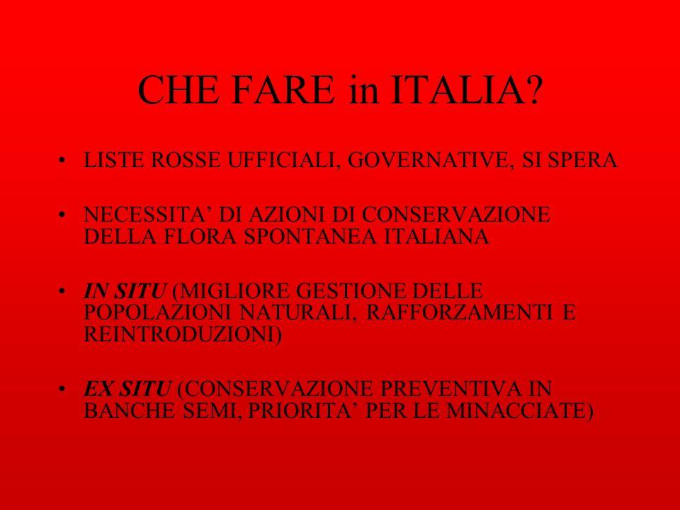 CHE FARE in ITALIA.