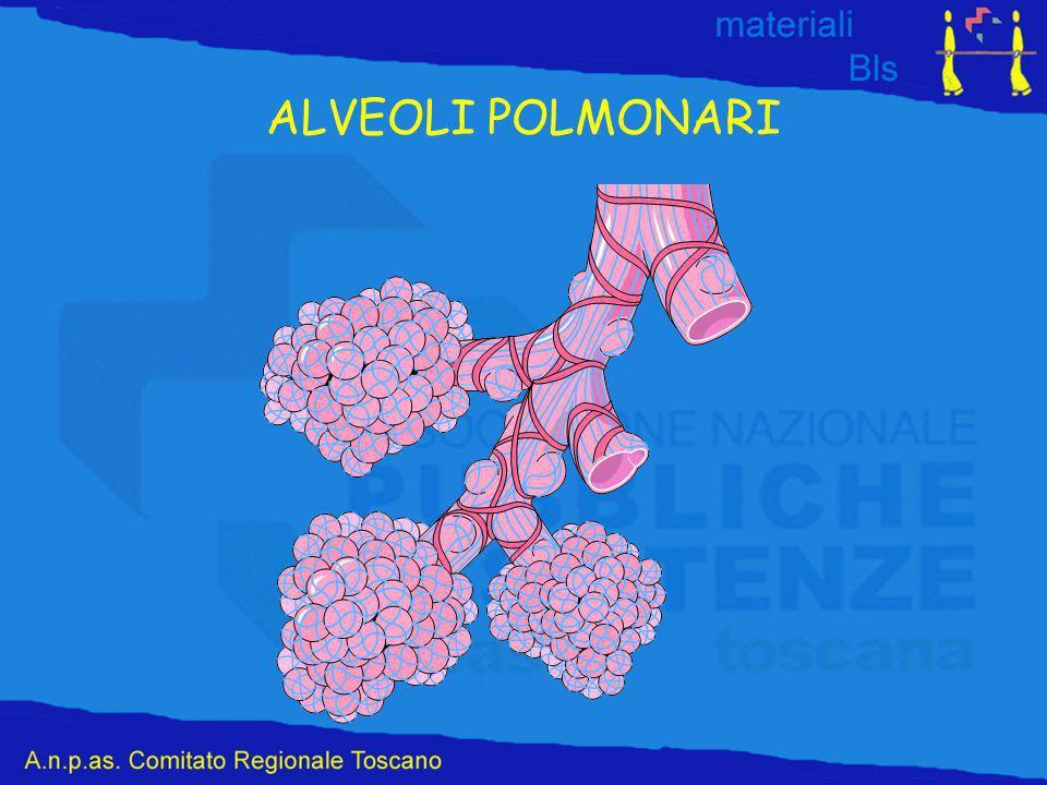 ALVEOLI POLMONARI