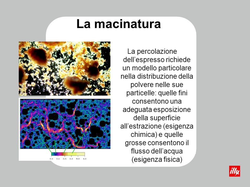 La macinatura La percolazione dellespresso richiede un modello particolare nella distribuzione della polvere nelle sue particelle: quelle fini consent