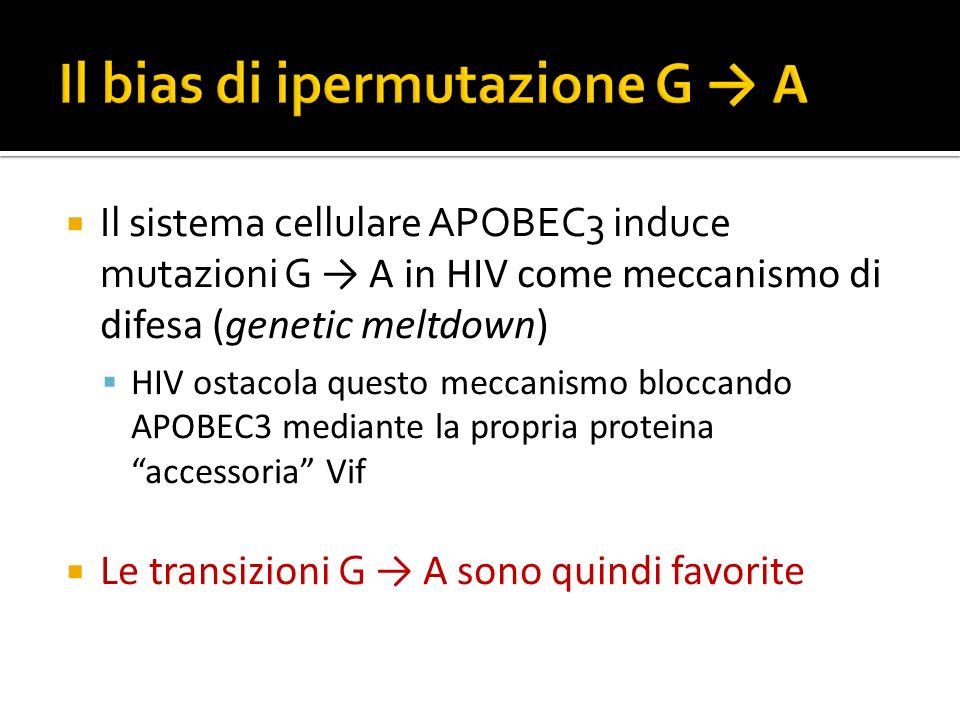 Il sistema cellulare APOBEC3 induce mutazioni G A in HIV come meccanismo di difesa (genetic meltdown) HIV ostacola questo meccanismo bloccando APOBEC3