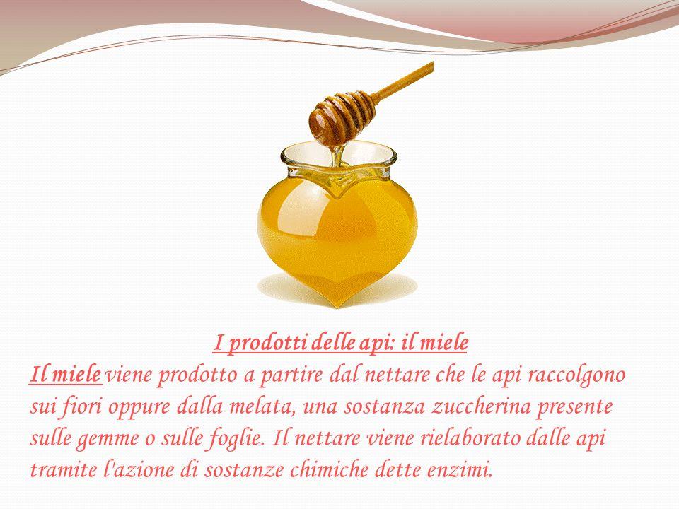 I prodotti delle api: il miele Il miele viene prodotto a partire dal nettare che le api raccolgono sui fiori oppure dalla melata, una sostanza zuccher
