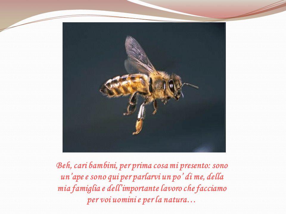 Avete visto quanto siano importanti le api per la natura, per migliorare le produzioni agricole, ma soprattutto per voi uomini.