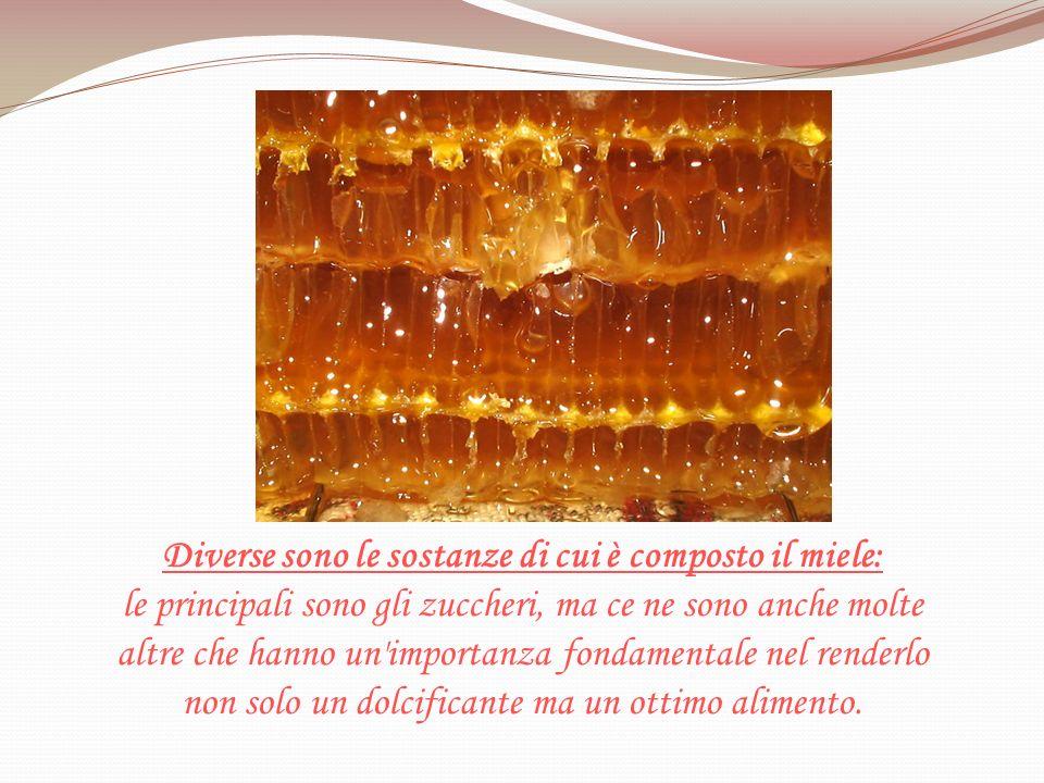 Diverse sono le sostanze di cui è composto il miele: le principali sono gli zuccheri, ma ce ne sono anche molte altre che hanno un'importanza fondamen