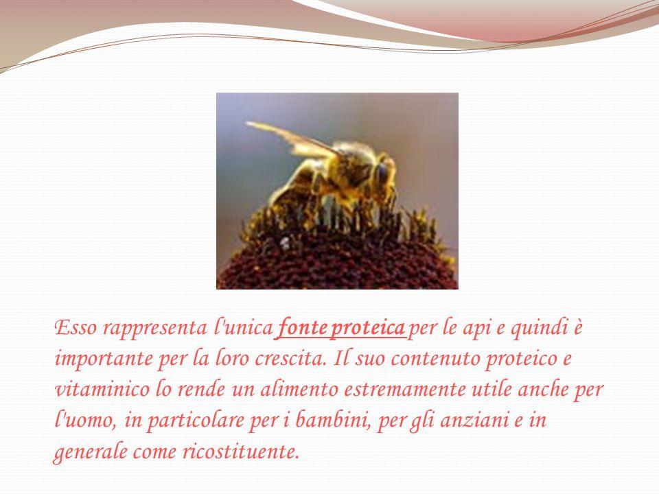 Esso rappresenta l'unica fonte proteica per le api e quindi è importante per la loro crescita. Il suo contenuto proteico e vitaminico lo rende un alim