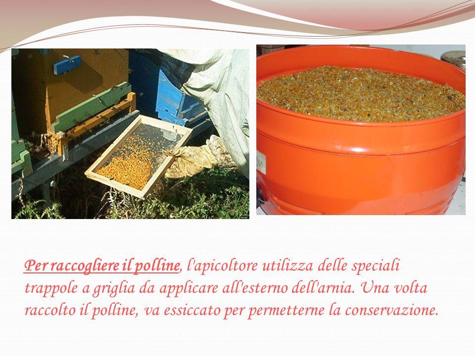 Per raccogliere il polline, l'apicoltore utilizza delle speciali trappole a griglia da applicare all'esterno dell'arnia. Una volta raccolto il polline