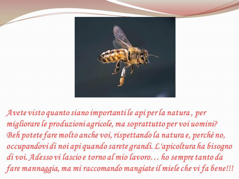 Avete visto quanto siano importanti le api per la natura, per migliorare le produzioni agricole, ma soprattutto per voi uomini? Beh potete fare molto