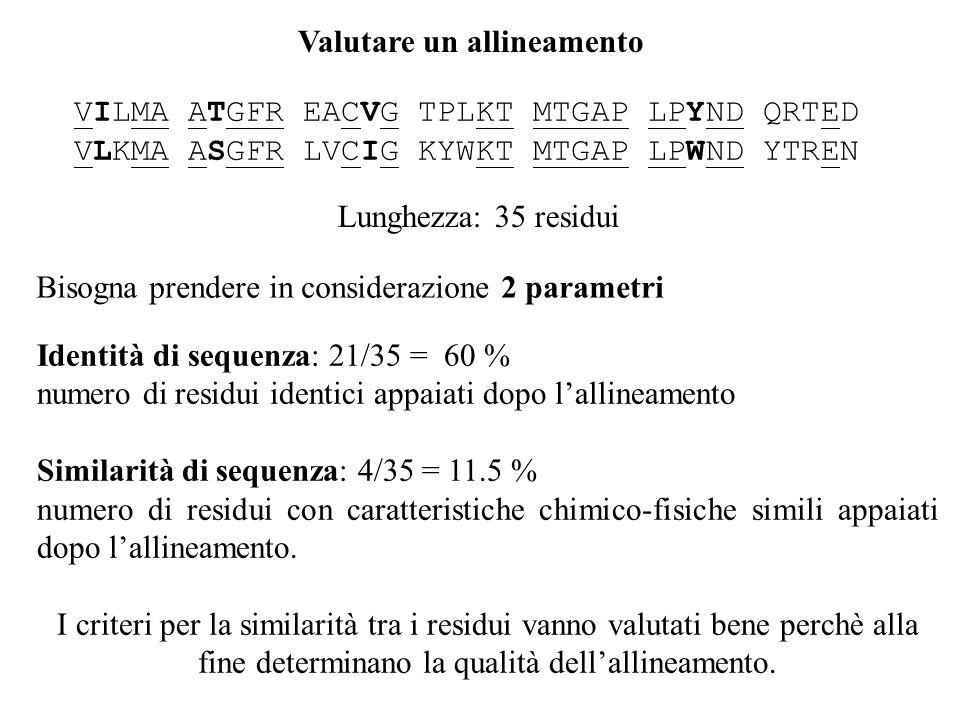 Identità di sequenza: 21/35 = 60 % numero di residui identici appaiati dopo lallineamento Similarità di sequenza: 4/35 = 11.5 % numero di residui con