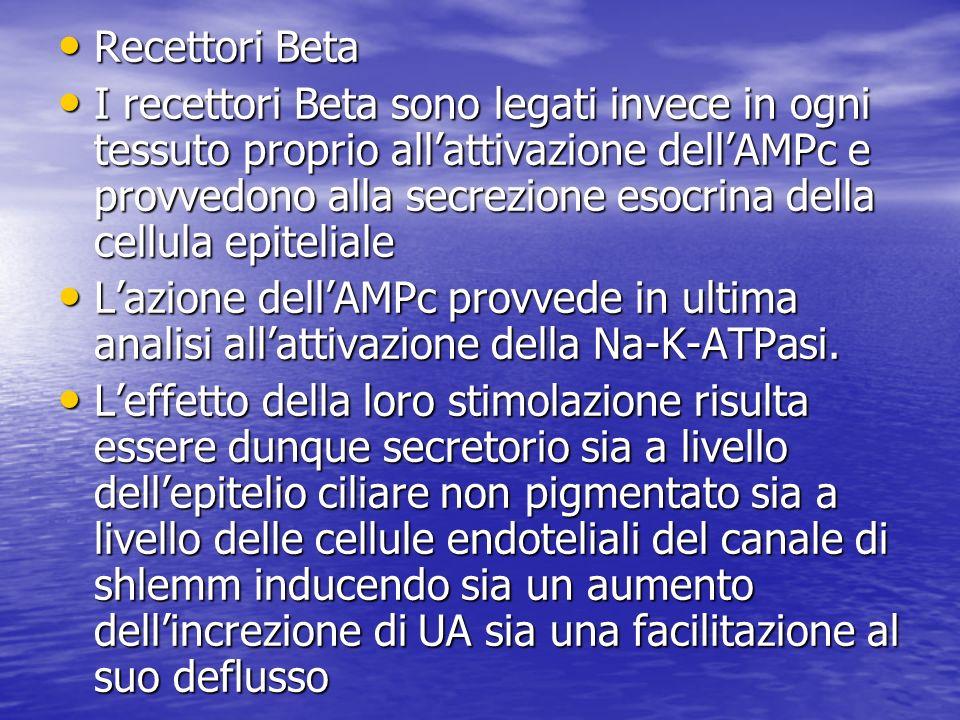 Recettori Beta Recettori Beta I recettori Beta sono legati invece in ogni tessuto proprio allattivazione dellAMPc e provvedono alla secrezione esocrin