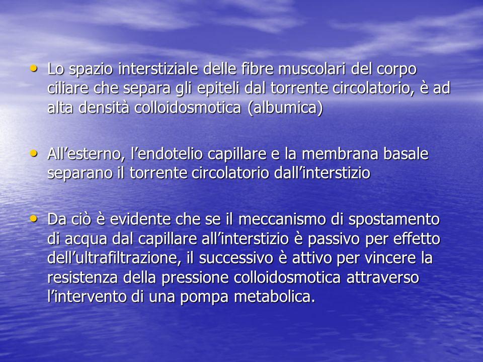 Lo spazio interstiziale delle fibre muscolari del corpo ciliare che separa gli epiteli dal torrente circolatorio, è ad alta densità colloidosmotica (a