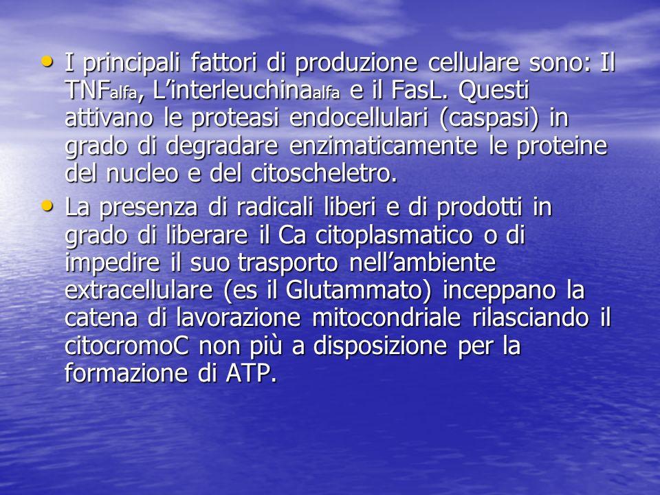 I principali fattori di produzione cellulare sono: Il TNF alfa, Linterleuchina alfa e il FasL. Questi attivano le proteasi endocellulari (caspasi) in