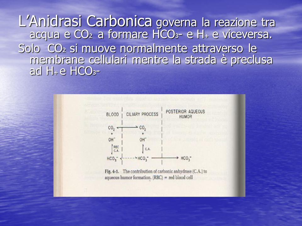 LAnidrasi Carbonica governa la reazione tra acqua e CO 2 a formare HCO 3 - e H + e viceversa. Solo CO 2 si muove normalmente attraverso le membrane ce