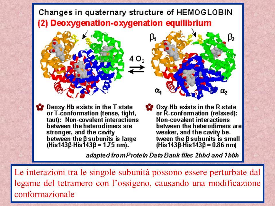 Le interazioni tra le singole subunità possono essere perturbate dal legame del tetramero con lossigeno, causando una modificazione conformazionale