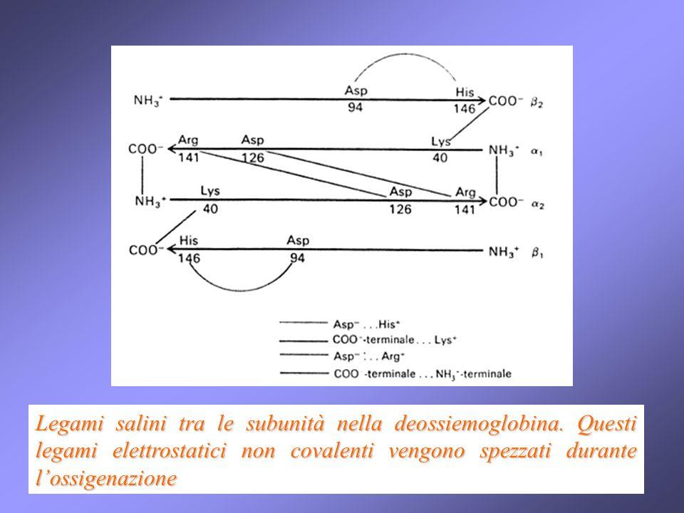 Legami salini tra le subunità nella deossiemoglobina. Questi legami elettrostatici non covalenti vengono spezzati durante lossigenazione
