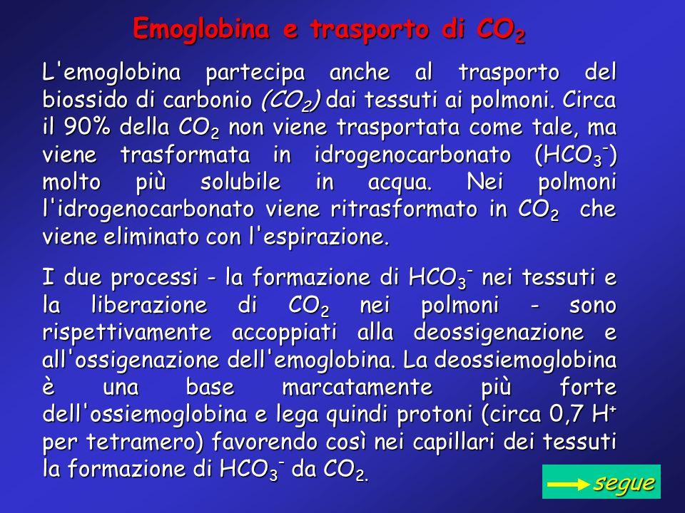Emoglobina e trasporto di CO 2 L'emoglobina partecipa anche al trasporto del biossido di carbonio (CO 2 ) dai tessuti ai polmoni. Circa il 90% della C
