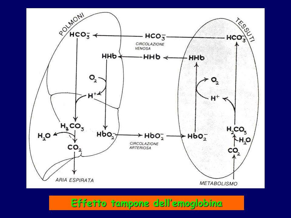 Effetto tampone dellemoglobina