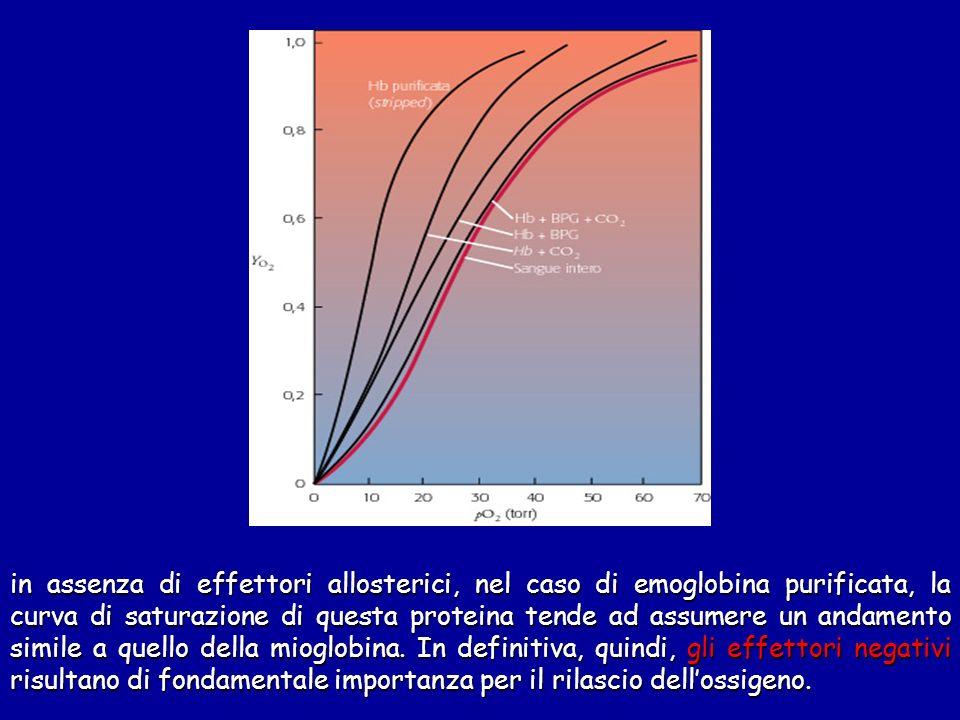 in assenza di effettori allosterici, nel caso di emoglobina purificata, la curva di saturazione di questa proteina tende ad assumere un andamento simi