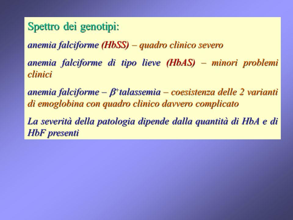 Spettro dei genotipi: anemia falciforme (HbSS) – quadro clinico severo anemia falciforme di tipo lieve (HbAS) – minori problemi clinici anemia falcifo