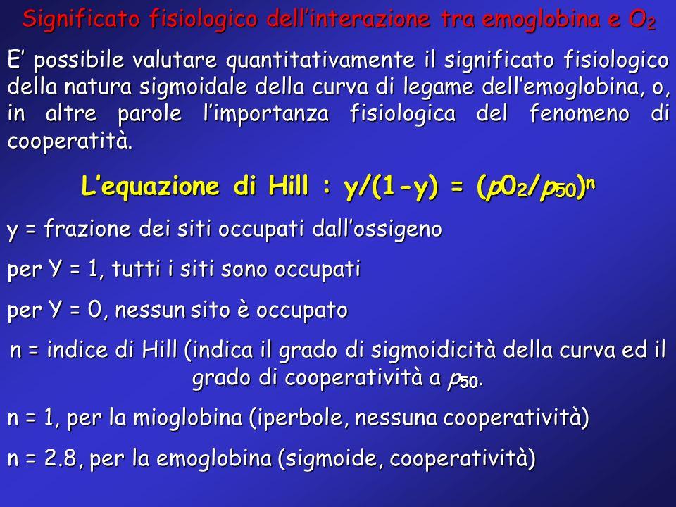 Significato fisiologico dellinterazione tra emoglobina e O 2 E possibile valutare quantitativamente il significato fisiologico della natura sigmoidale