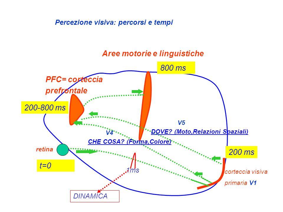 retina corteccia visiva primaria V1 PFC= corteccia prefrontale V4 CHE COSA? (Forma,Colore) V5 DOVE? (Moto,Relazioni Spaziali) Aree motorie e linguisti