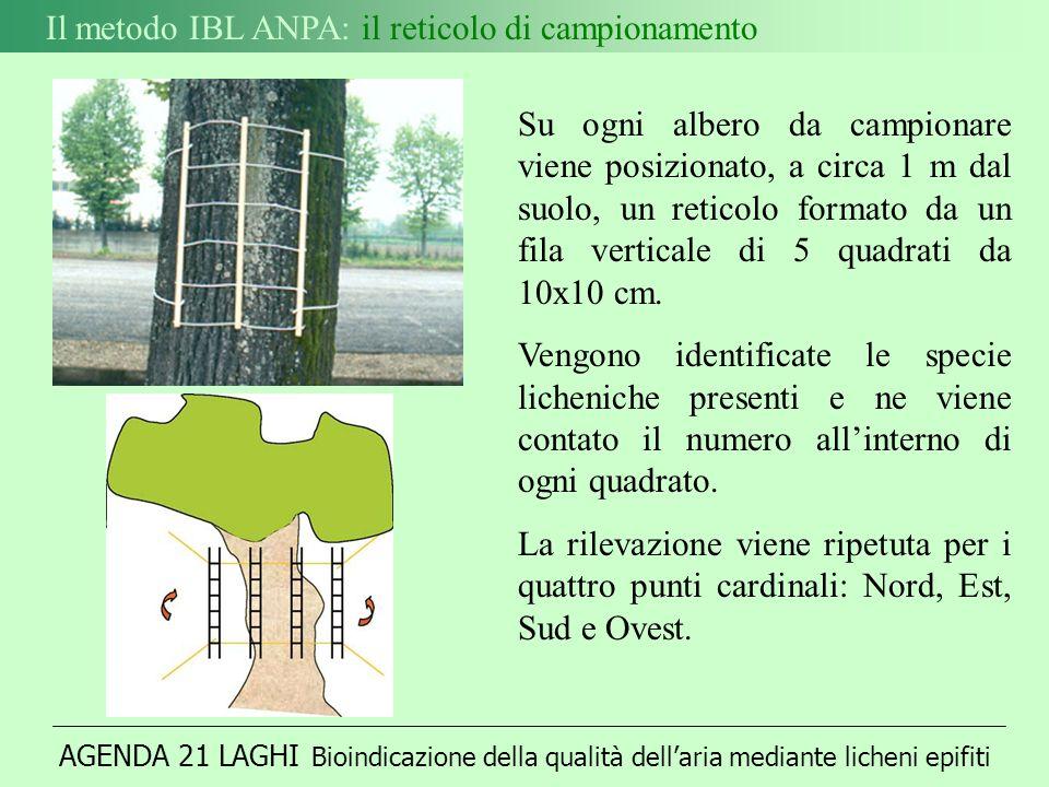 AGENDA 21 LAGHI Bioindicazione della qualità dellaria mediante licheni epifiti Il metodo IBL ANPA: il reticolo di campionamento Su ogni albero da campionare viene posizionato, a circa 1 m dal suolo, un reticolo formato da un fila verticale di 5 quadrati da 10x10 cm.