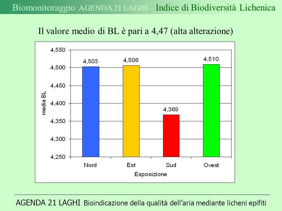 AGENDA 21 LAGHI Bioindicazione della qualità dellaria mediante licheni epifiti Biomonitoraggio AGENDA 21 LAGHI – Indice di Biodiversità Lichenica Il valore medio di BL è pari a 4,47 (alta alterazione)