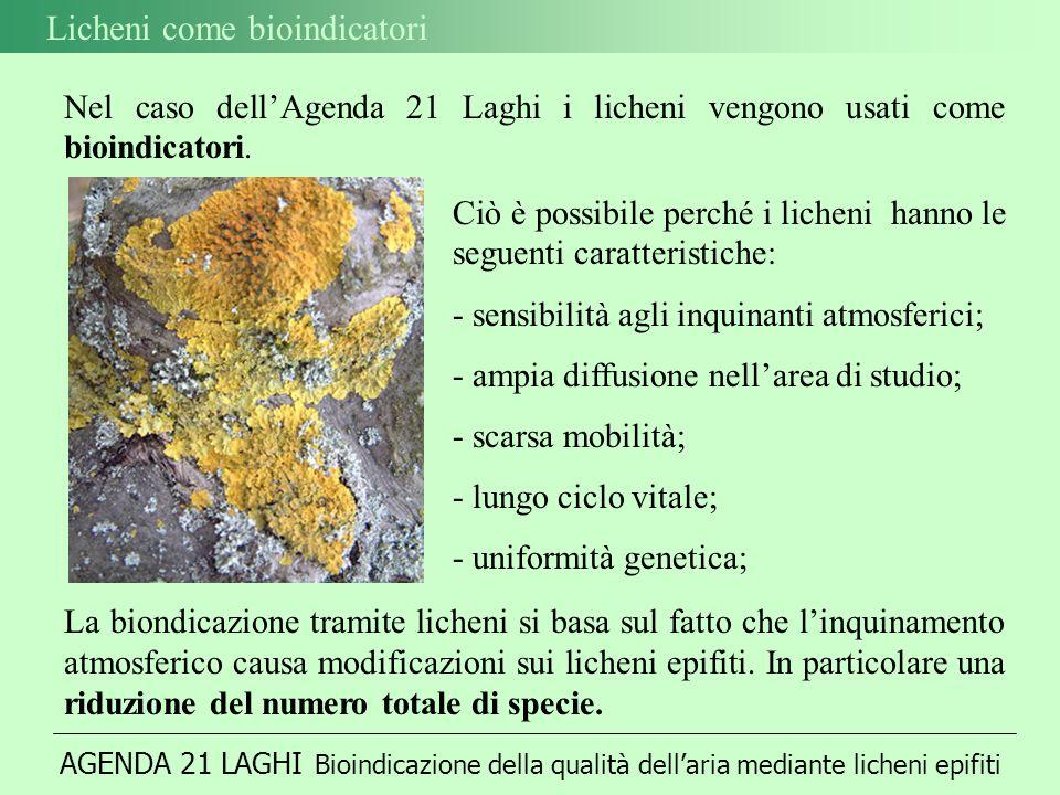 AGENDA 21 LAGHI Bioindicazione della qualità dellaria mediante licheni epifiti Licheni come bioindicatori Nel caso dellAgenda 21 Laghi i licheni vengono usati come bioindicatori.